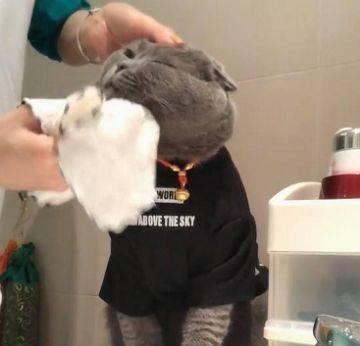 猫咪洗脸图图片