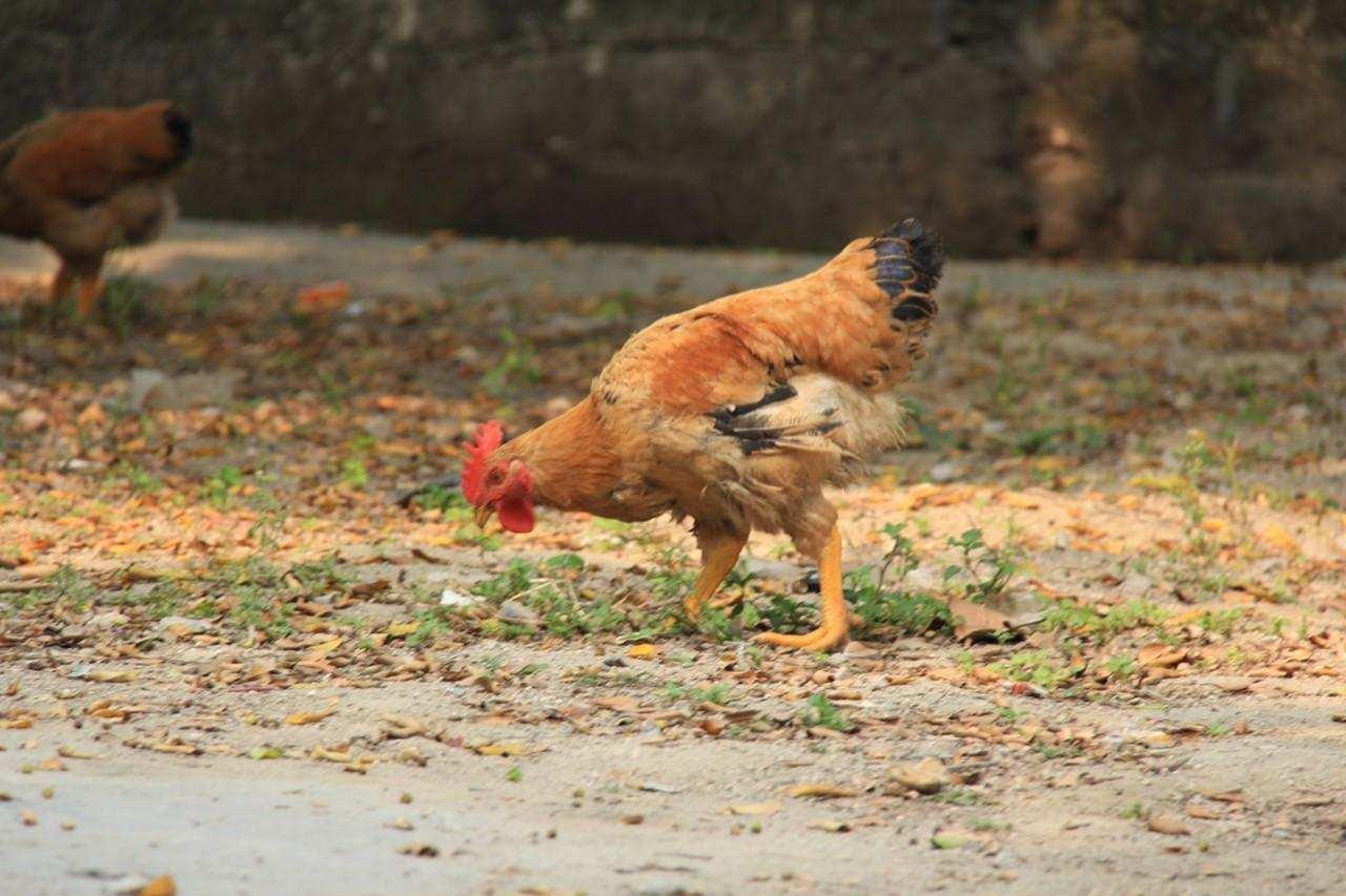驯化和驯服的区别 什么动物不能被驯化