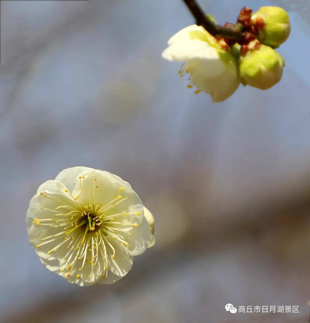 春日微微暖,商丘市日月湖景区即将迎来片片花海