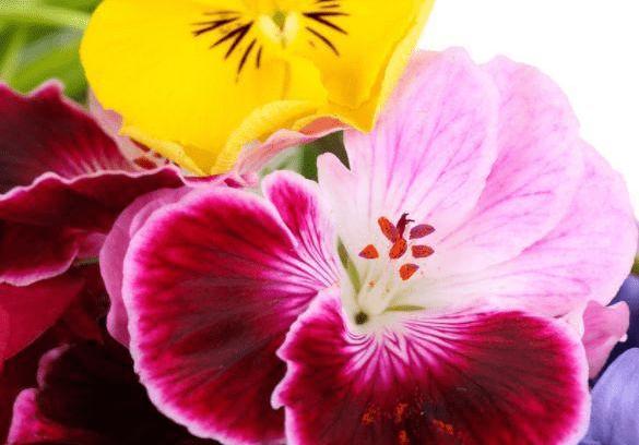 人见人爱,花见花开的3个生肖女,外表漂亮而且有魅力  第1张