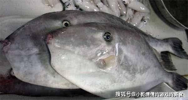 海鲜市场有5种鱼,没法养殖,126直营网app只有野生的,看见了尽管往下压代价