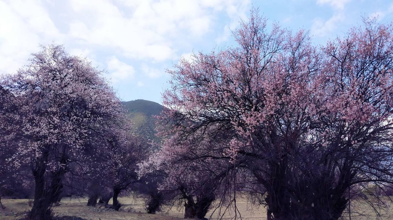 什么是春天?那是桃花漫山的西藏小众美景
