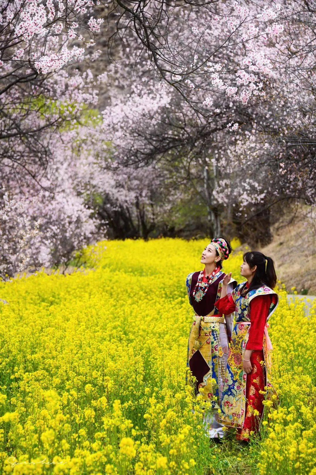 西藏春天旅行这些值得体验的项目你都玩过了吗?