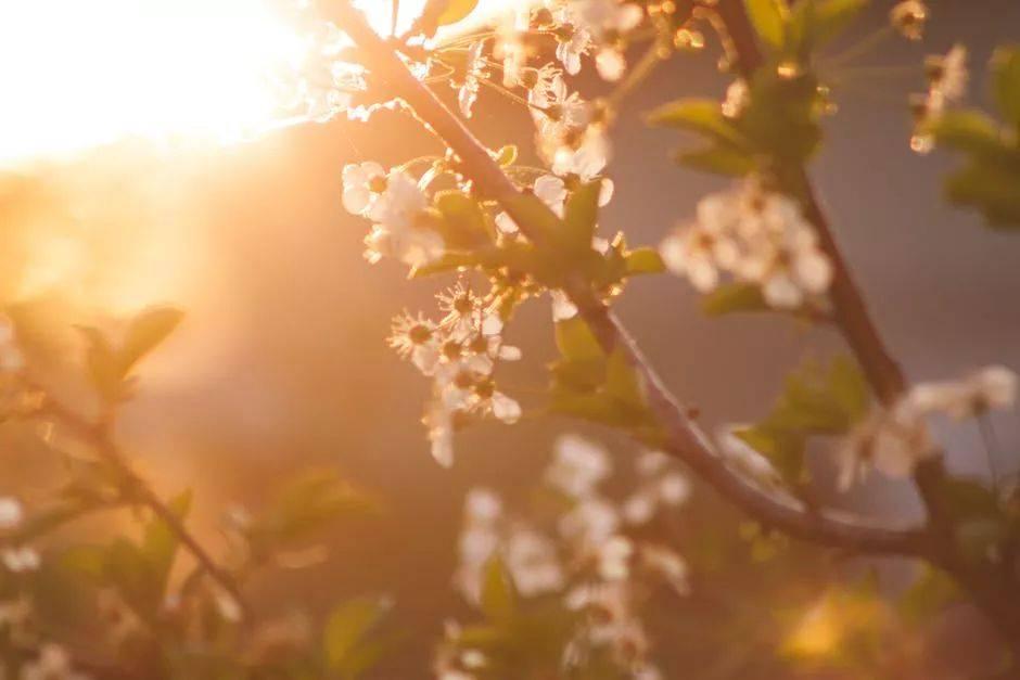 三月,出游赏花的最好时节,总有一个地方适合去小住三五天!
