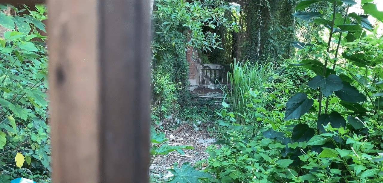 鼓浪屿上的荒废房屋,面积不小,如今草比人高