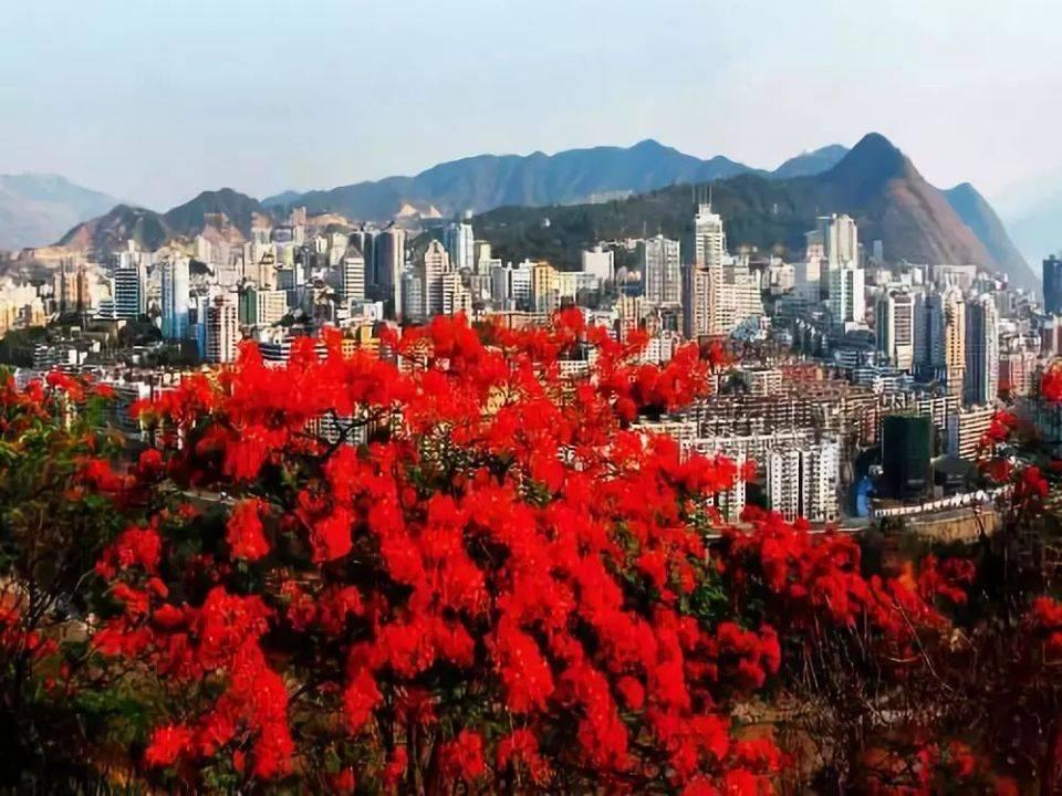 四川攀枝花市居然是因花得名,那么攀枝花是什么花?你很可能见过