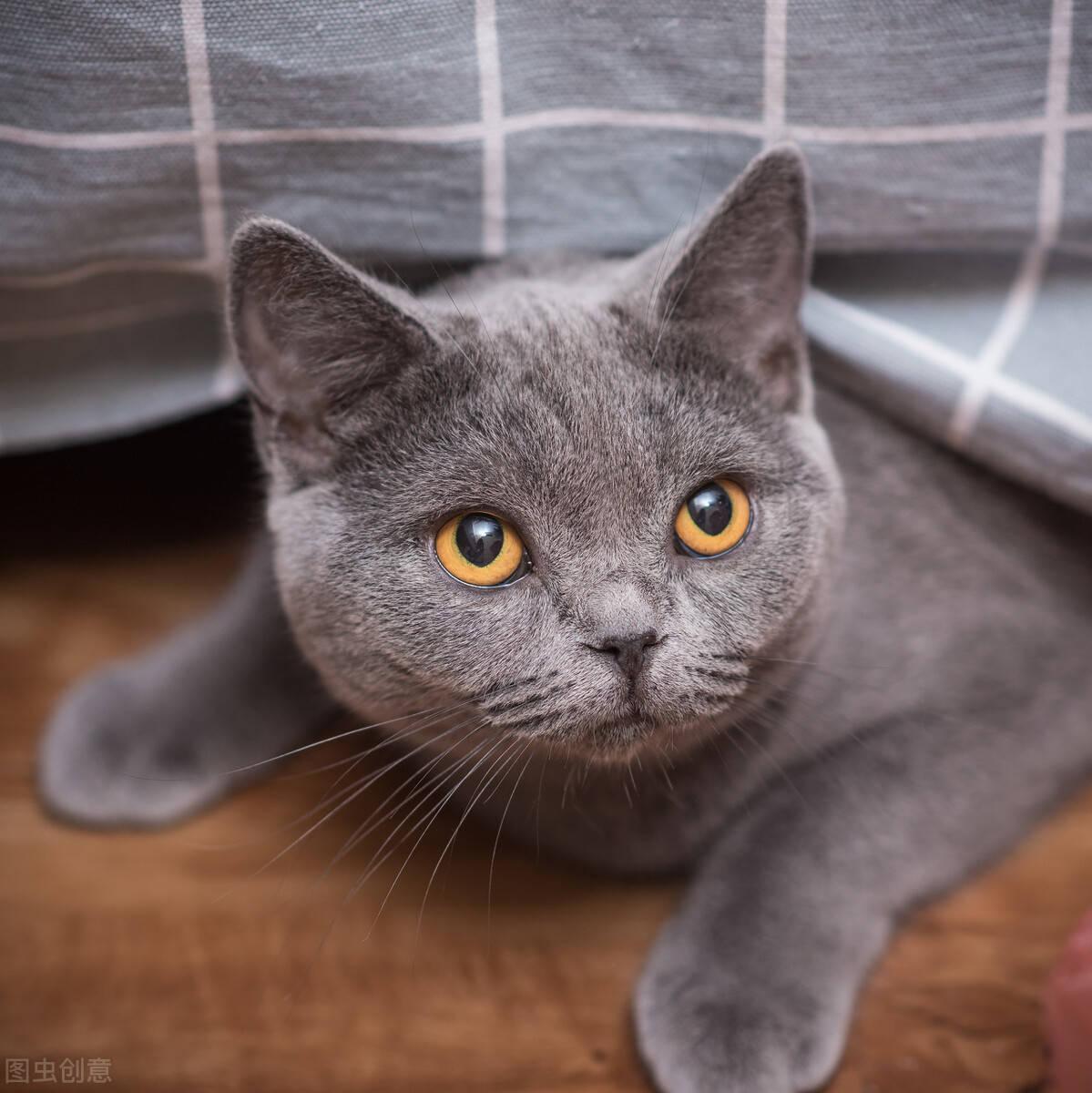 成都共享猫咪9块9租一天惹争议 目前已关门歇业广告已被撕下