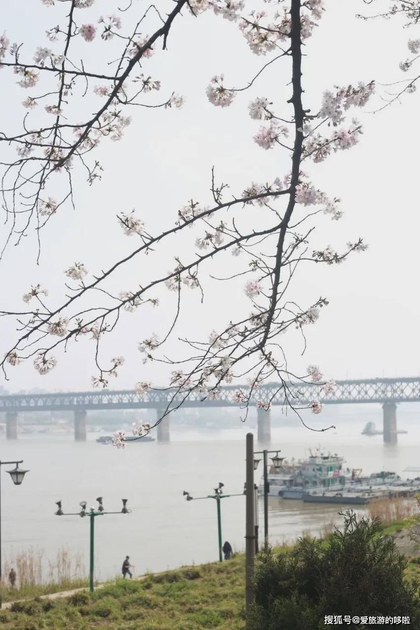 实探归来,樱花季的武汉远比期待中更美更好吃!