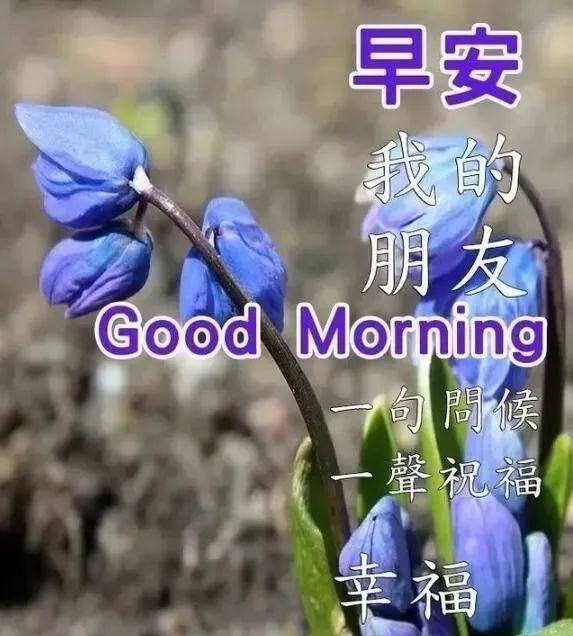 调皮的早安问候图片卡通  高雅早上好唯美图片图片