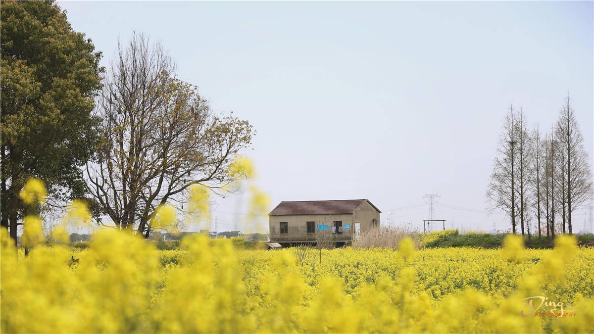 原创             苏州这才是最美乡村该有的样子,避开人流拥挤的闹市,这才是生活
