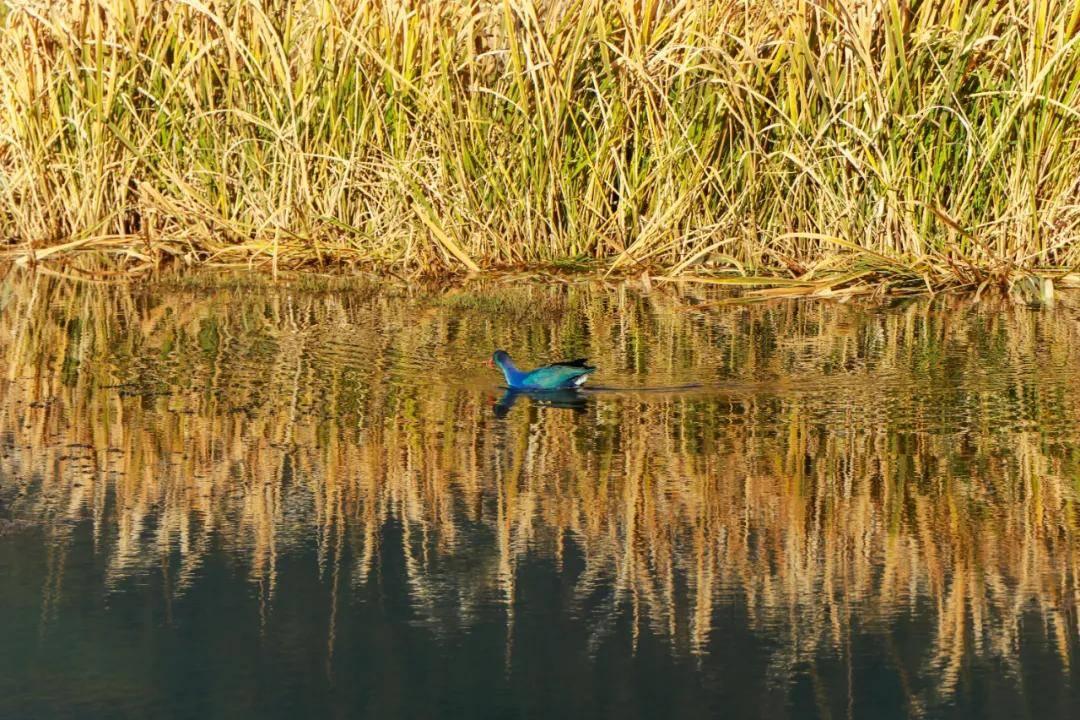 以观鸟之名带你领略腾冲生物多样性