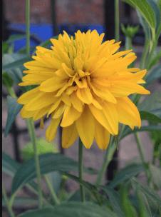 心理测试:你喜欢哪个颜色的花?测你下个月会不会有好运气