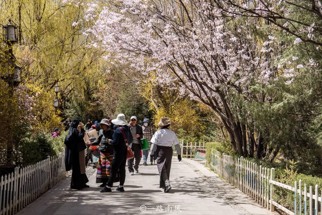没想到拉萨的春天这样美,明明是高原城市,却有身在江南的错觉