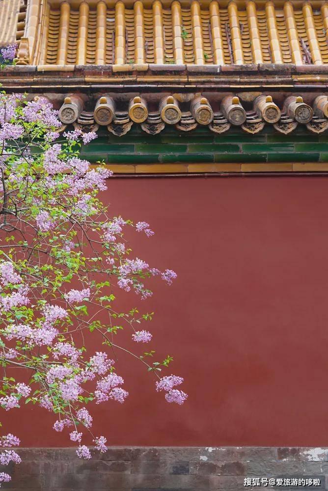 别再只去婺源、林芝了,这里藏着中国最美的春天!