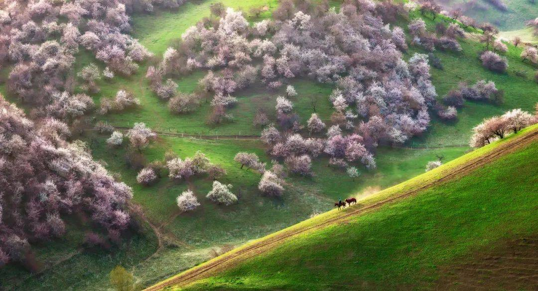 没有一个春天,如新疆这般烂漫而磅礴!