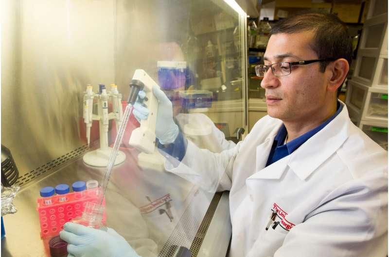 """《科学进展》:美专家发明""""大脑胶水"""",有望修复脑损伤"""