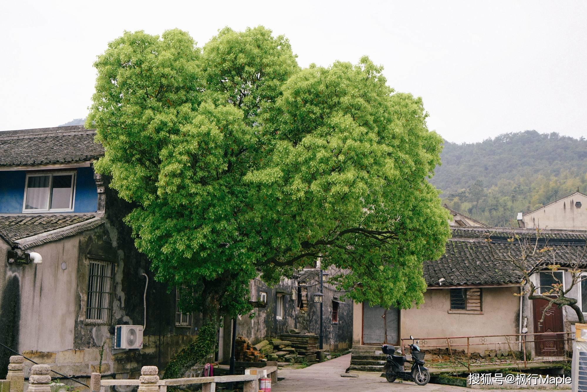 """宁波东钱湖畔,上千年历史古街,号称""""浙东第一街"""",低调且免费"""