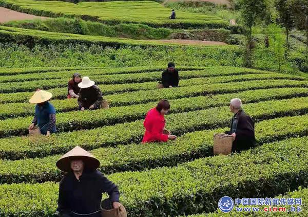 助力乡村振兴——中和大地栏目组走进陕西汉中徐家庵村茶叶园区