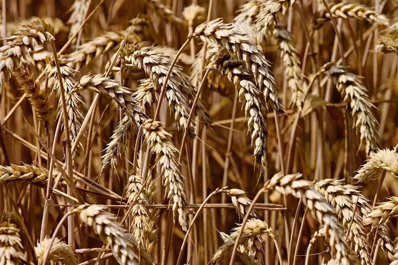 国家粮食储备十四亿人口可吃几年_中国粮食储备够吃几年