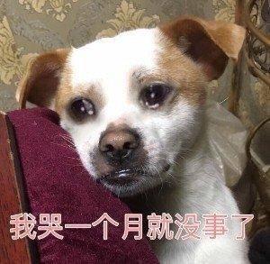 鸿图2注册邓婕前夫离婚后身价上亿?她小三上位遭张国立原配要求不许生子?60岁才当母亲 (图32)