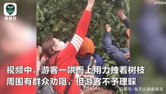 天门山景区游客、暴力采摘果子、多数为老年人  第2张