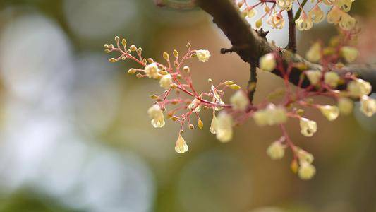 下周起桃花围绕,收获真爱,和另一半过上甜蜜生活的三个星座  第2张