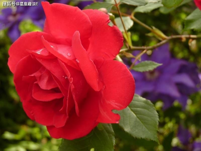 4月29日爱情运势:笃定情缘,喜出望外的四大星座  第3张