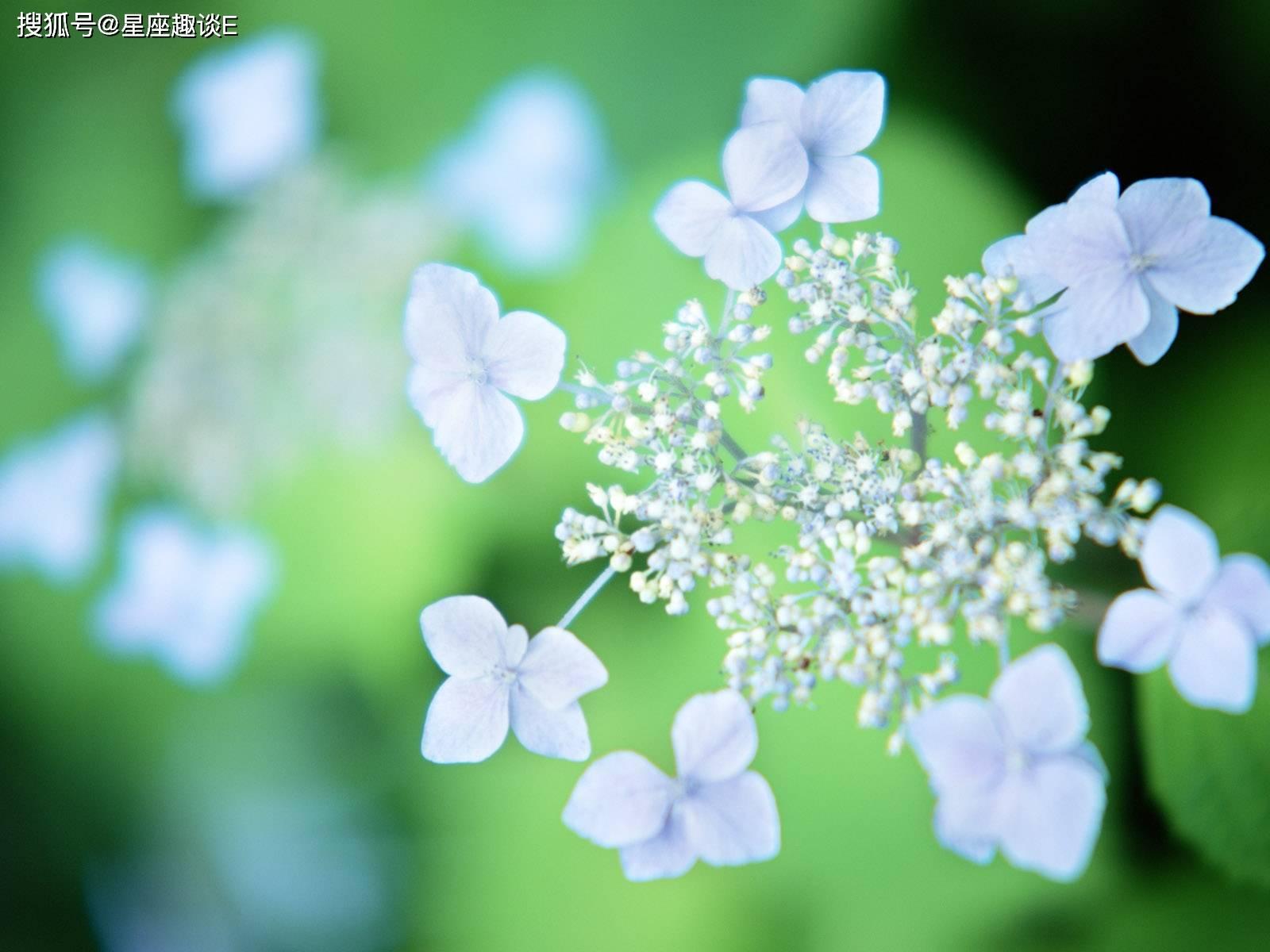 5月1日爱情运势:桃花敲门,情真意切的四大星座  第3张