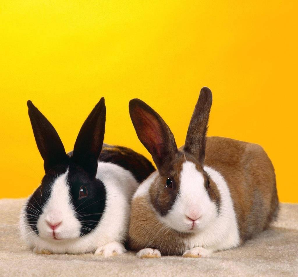 99年属兔三大灾难 99年属兔的姻缘在哪年