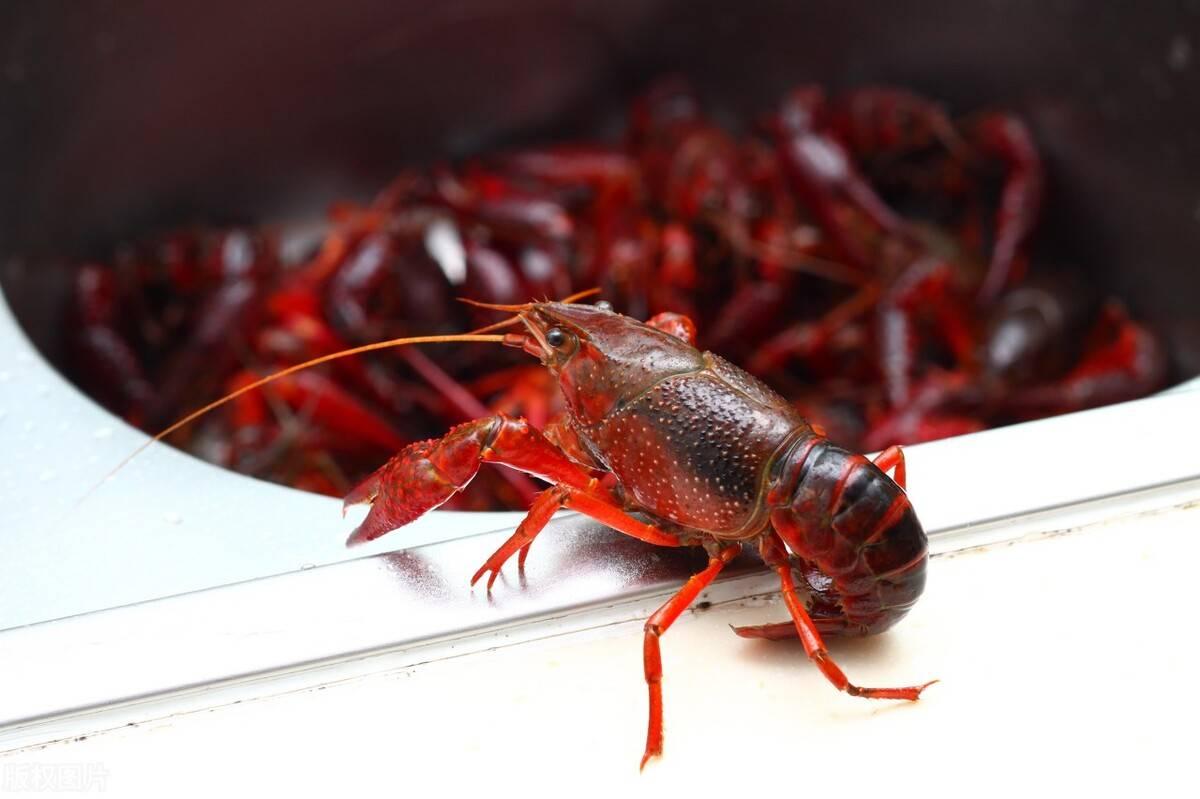 5月份小龙虾在什么时候捕捞最好?