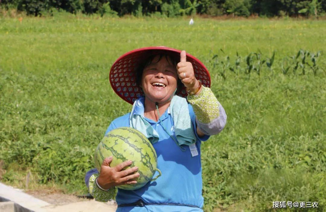 西瓜为什么是蔬菜(西瓜皮可以做什么菜)