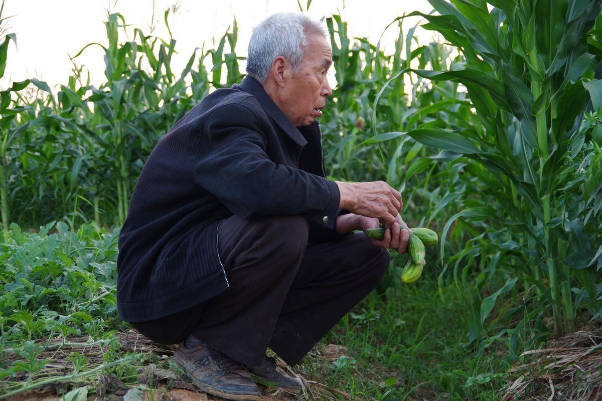 农村90岁老人有啥补助 80岁老人免交医保政策