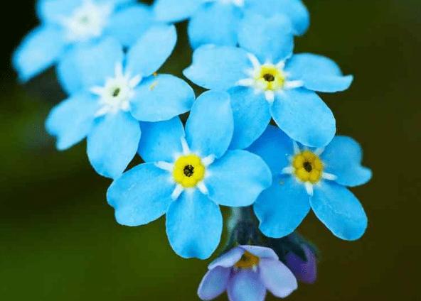 心理测试:四种花,你会选哪种?测出你的贵人何时出现在你身边  第4张
