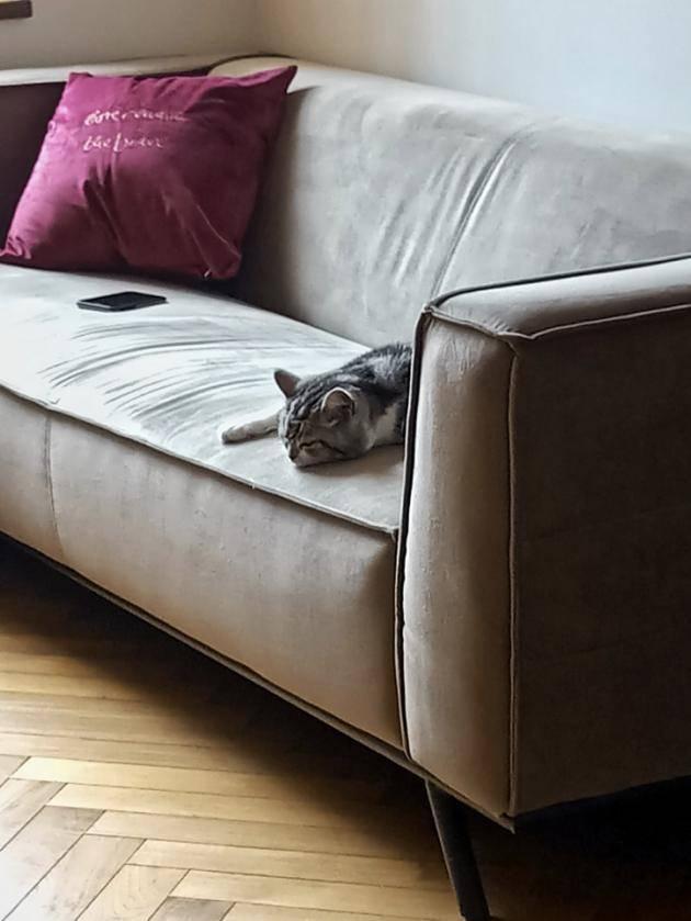 成都姑外家中的瑰丽时优乐平台登录势:53㎡一人一猫的生计,