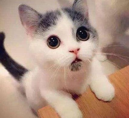 寵物:日常要給貓咪做哪些護理,才能讓家人放心