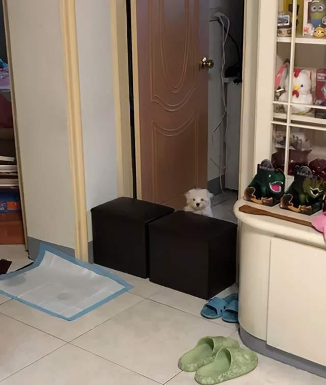 全家人找不到狗狗,最後發現它原來是藏在這裡,笑噴了!