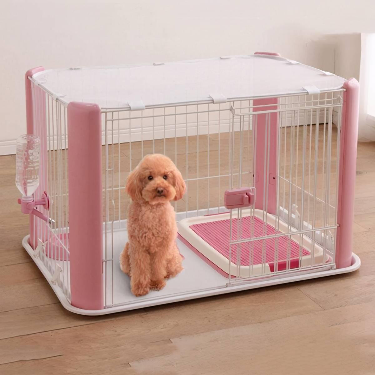 別再花錢買狗窩,這才是你家狗最愛睡的5個地方