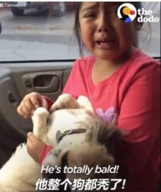 笑噴,可愛女孩給狗剃毛沒把握住分寸,失聲痛哭:跟豬一樣