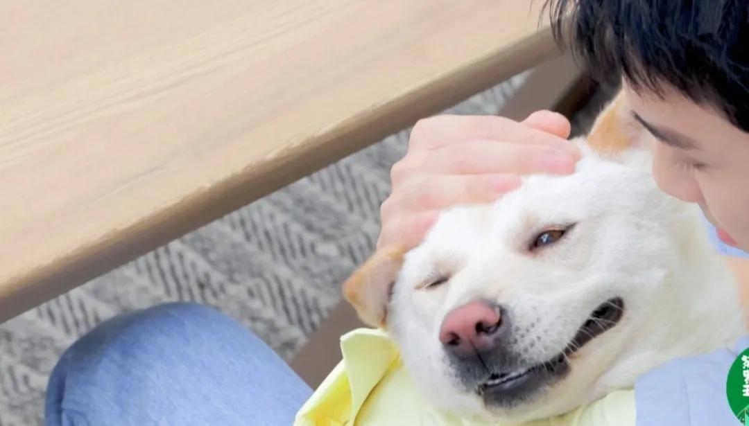 吴磊抱狗姿势冲上热搜,网友:别人是抱狗,他是抱娃