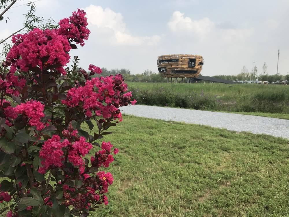 盛夏北京,免费的,超美的,宝藏的拍照圣地——温榆河公园