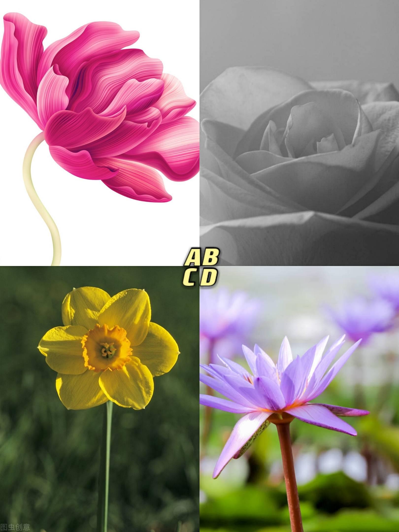 心理测试:你最喜欢哪朵花,测出你的情商