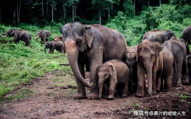 印度大象疯狂挖地11个小时,村民想帮却不敢靠近,真相令人感动