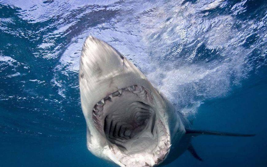 海洋中最危险的动物,水母竟排名第五,第一当之无愧