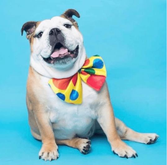 怒砸11万为狗子过生日,网友:你家还缺狗吗?