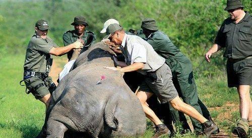史书中频繁出现的犀牛,如今为何一只都找不到了?