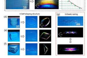 簡訊!南京林業大學何明:高雙摺,高含水,高取向纖維素水凝膠無灌模自成形