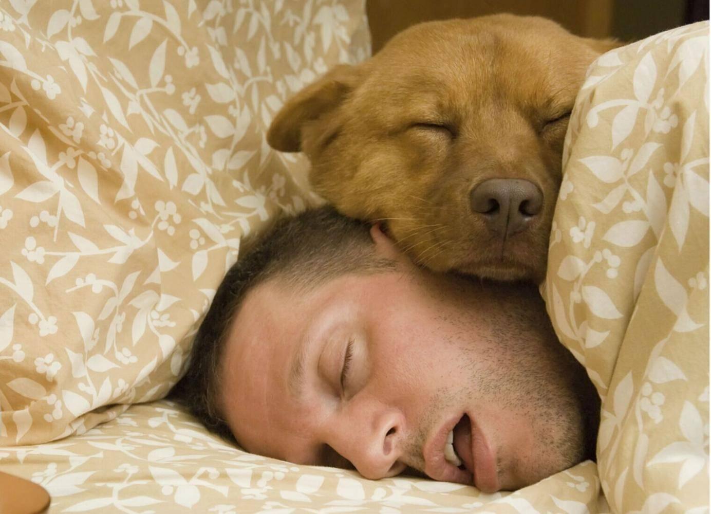 狐大医 | 睡觉时磨牙是因为肚子里有虫?专家:注意这3点,千万别忽视