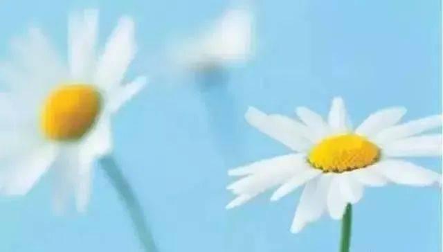描写雨中月季花的优美句子 赞美月季花的优美句子