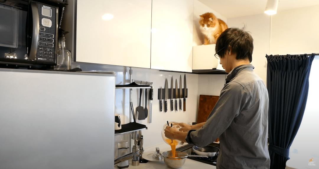 美食博主靠猫爆红吸粉470w!