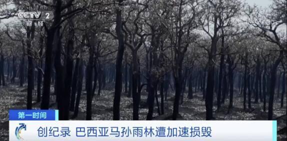 """心痛!""""地球之肺""""1个月内遭损毁面积超1000平方千米!11年来最大值"""